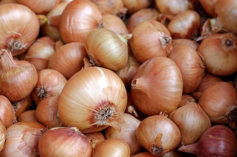 """Résultat de recherche d'images pour """"onion oignon orthographe"""""""