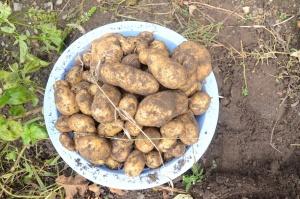 potatoes-704660_1920