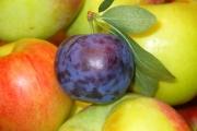 fruits-1868977_1920-2