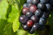 grapes-1293173_1920-3