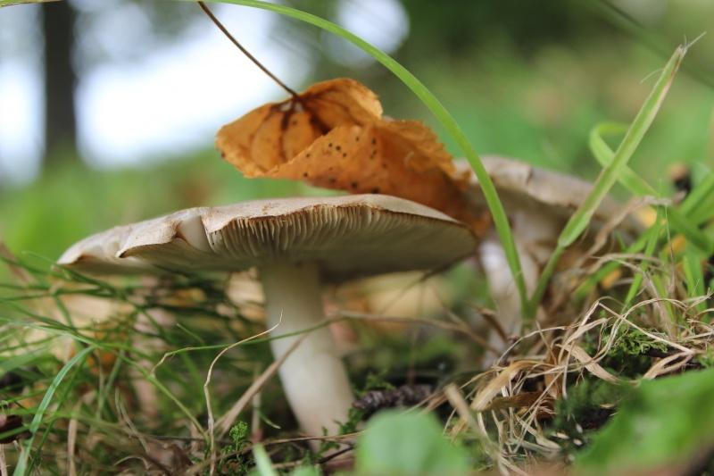 mushroom-2745595_1920