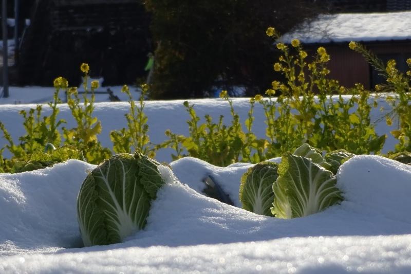 vegetables-2758670_1920