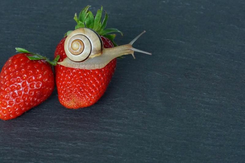 strawberry-2249818_1920
