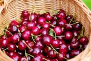 cherries-1453333_1920-1-1-1