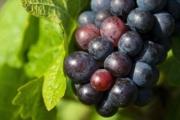 grapes-1293173_1920-2-2