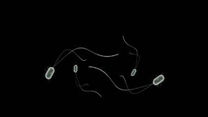 bacteria-1777339_1280