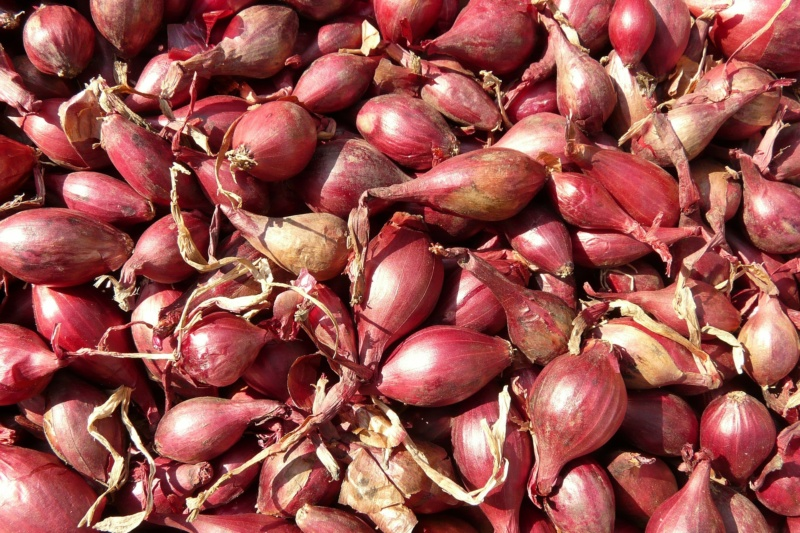 red-shallots-5768_1920(1)