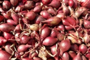 red-shallots-5768_1920-5-1