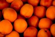 apricot-1556851_1920-1-2-2