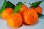 oranges-795634_1920-1-2-1