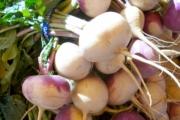 turnips-998_1920-1-1